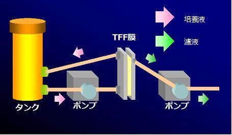 TFF膜利用による抽出、濾過(特徴)